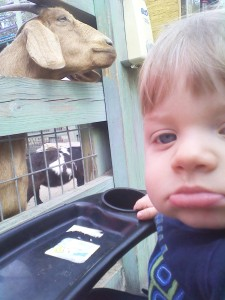 Pettin' a goat